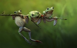 tree-frogs-on-a-branch